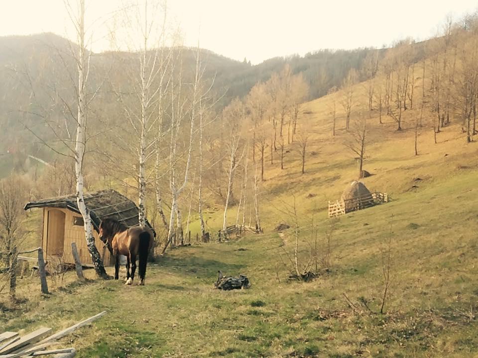 horsey checking da cabin