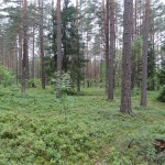 Deeper in da Forest