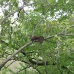 squirrlez