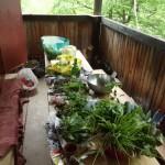 Veggies ready for planting
