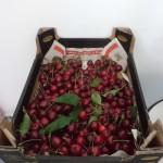O Dat Cherry